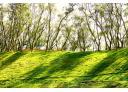 台北陽明山在苑裡實現了森林空氣水